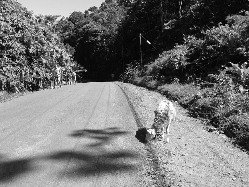 fekete-fehér birka1.jpg